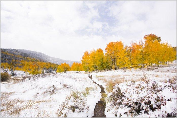When Fall Meets Winter