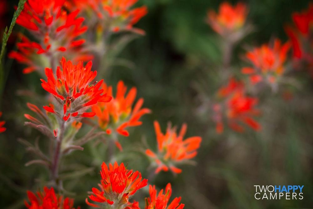 21-061911wildflowers (1)