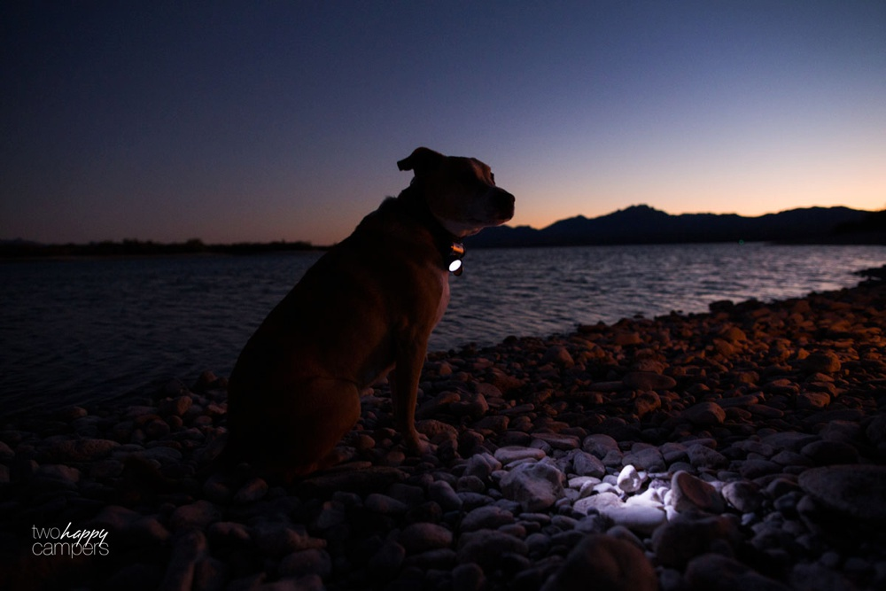 Give your dog a headlamp